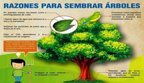 Principales beneficios de plantar rboles ceuta for Porque son importantes los arboles wikipedia